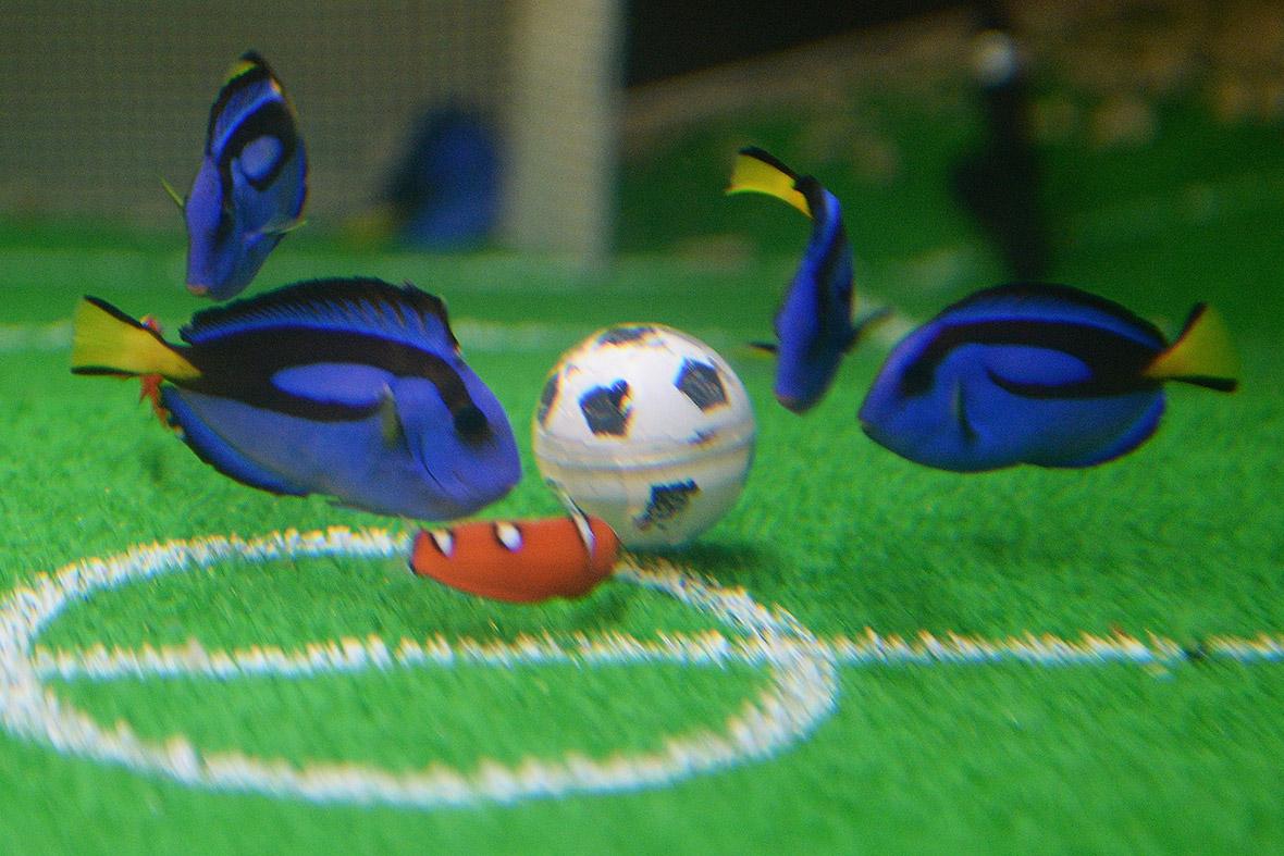 world cup fish