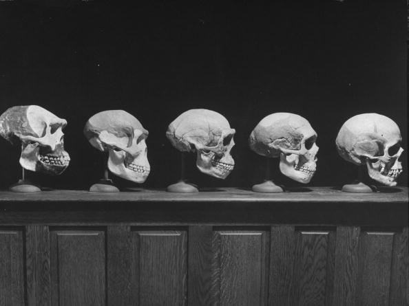 Human faces  evolution