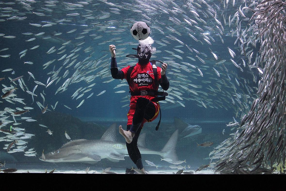 world cup aquarium