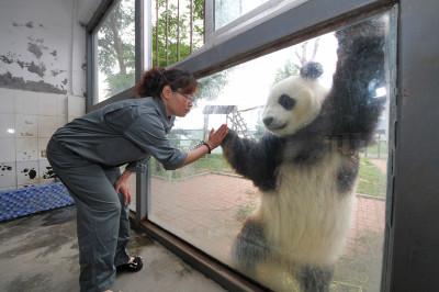 panda hand