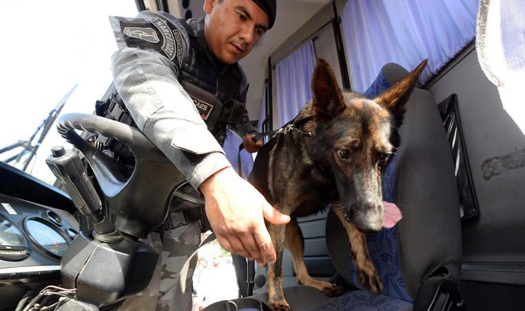 brasilia dog