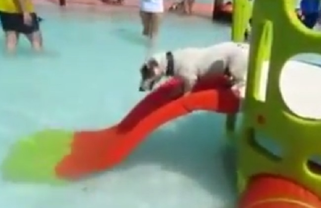 The Resort Canino Can Jane