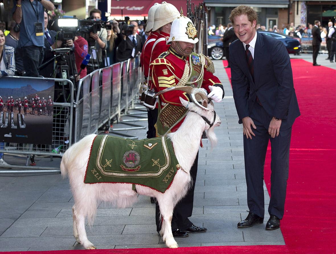 prince harry goat