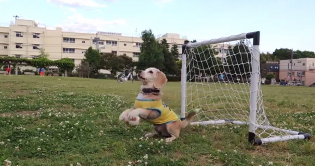 Purin The Super Beagle