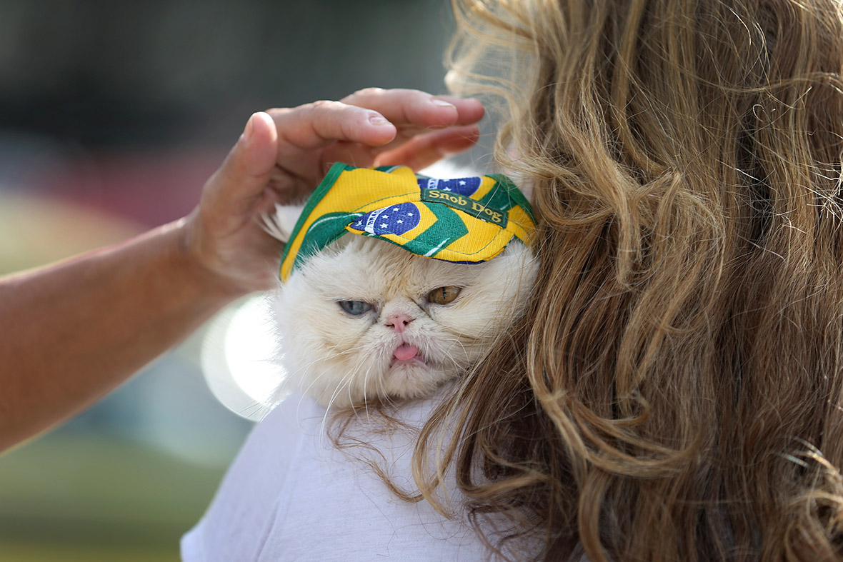 World Cup cat