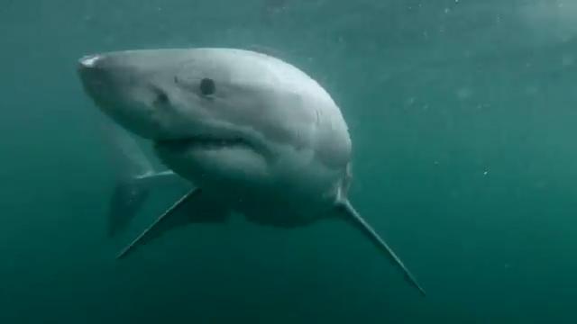Man Narrowly Escapes Shark Attack after Cliff Jump
