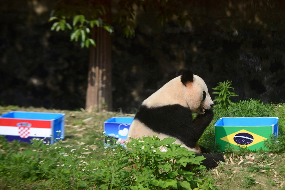 world cup panda prediction