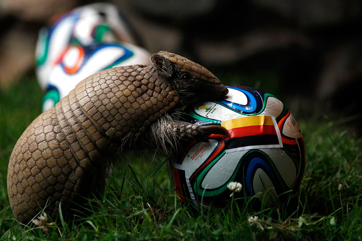 world cup animals