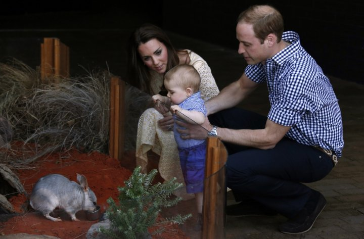 Catherine, Duchess of Cambridge, and her husband Prince William watch as their son Prince George looks at an Australian animal called a Bilby, which has been named after the young prince, during a visit to Sydney\'s Taronga Zoo April 20, 2014.