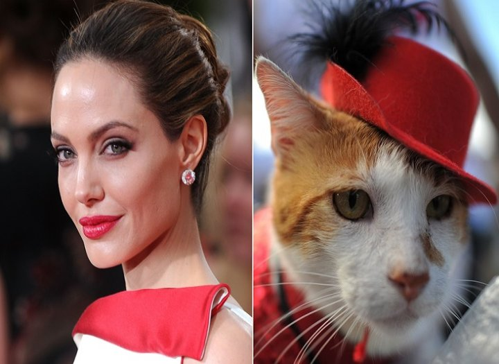 Actress Angelina Jolie looks just like a cat, according to 70% of cat-owners in poll