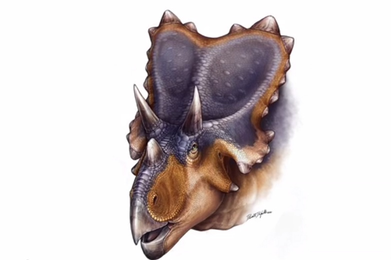 Mercuriceratops Gemini