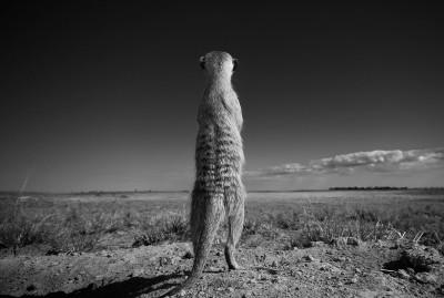 Sentry duty, Neil Aldridge South Africa