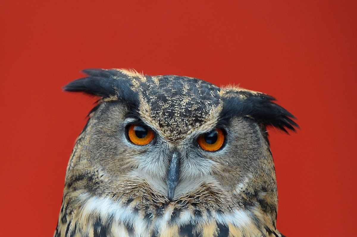 Labour said its 'owl policy' was the result of hackers breaking in to its official Twitter account