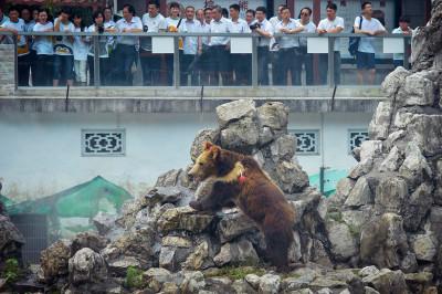 bear tranquilliser dart