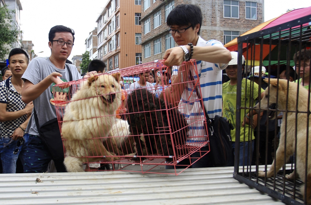 China Dog Meat Festival: Protests Begin as 10,000 Sign ... - photo#47