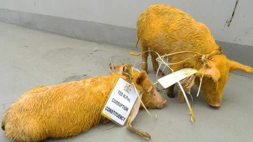 Pigs Smuggled into Ugandan Parliament