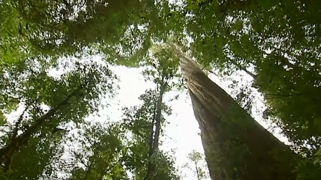 UN Rejects Australia's Request to Remove Tasmanian Forest's World Heritage Status