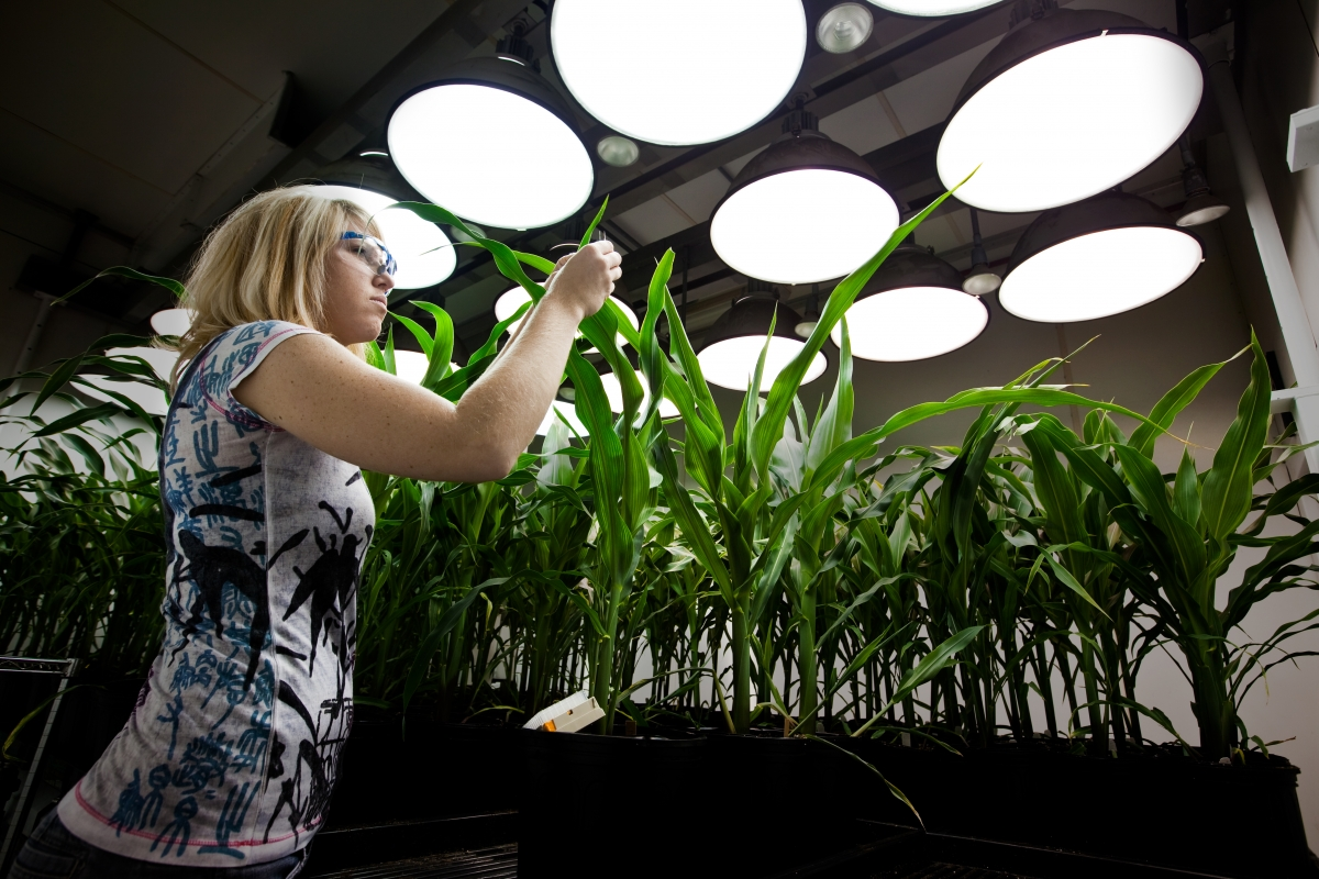 Inside the Greenhouses of Monsanto
