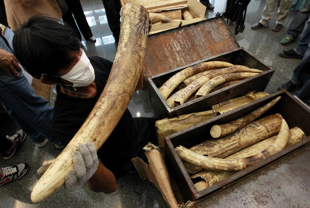 Thai Ivory Market elephant poaching