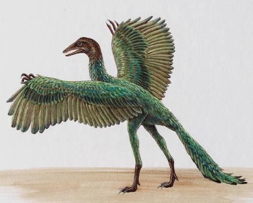 Archaeopteryx artist rendering
