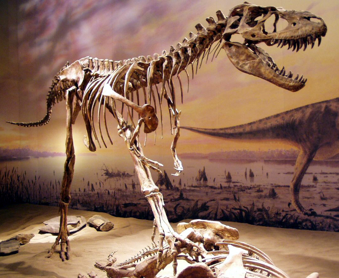 The Gorgosaurus was a bipedal predator which could weigh up to nearly three tonnes