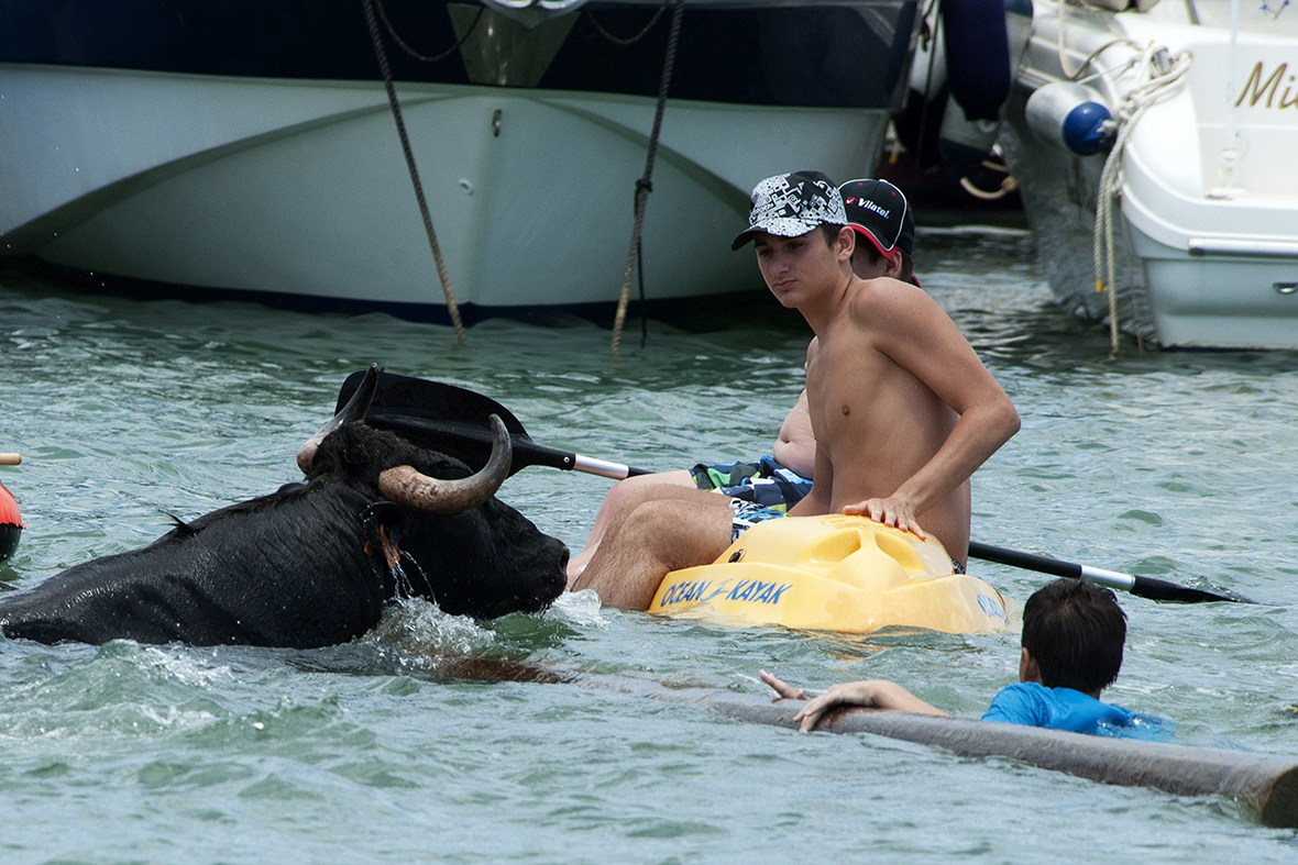 bull in sea kayak