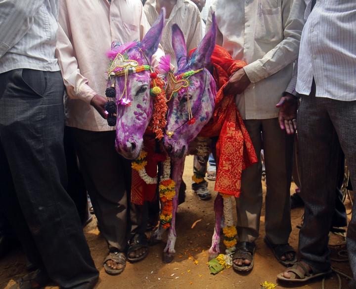 India monsoon and donkey weddings