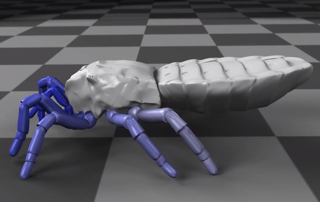 arachnid walk