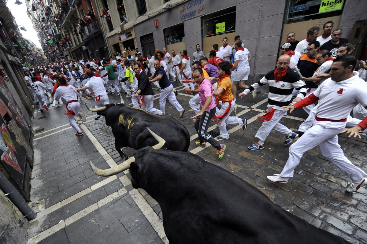 Revenge of the Bulls: Author of Pamplona bull-run survival guide badly injured by, that's right, a bull