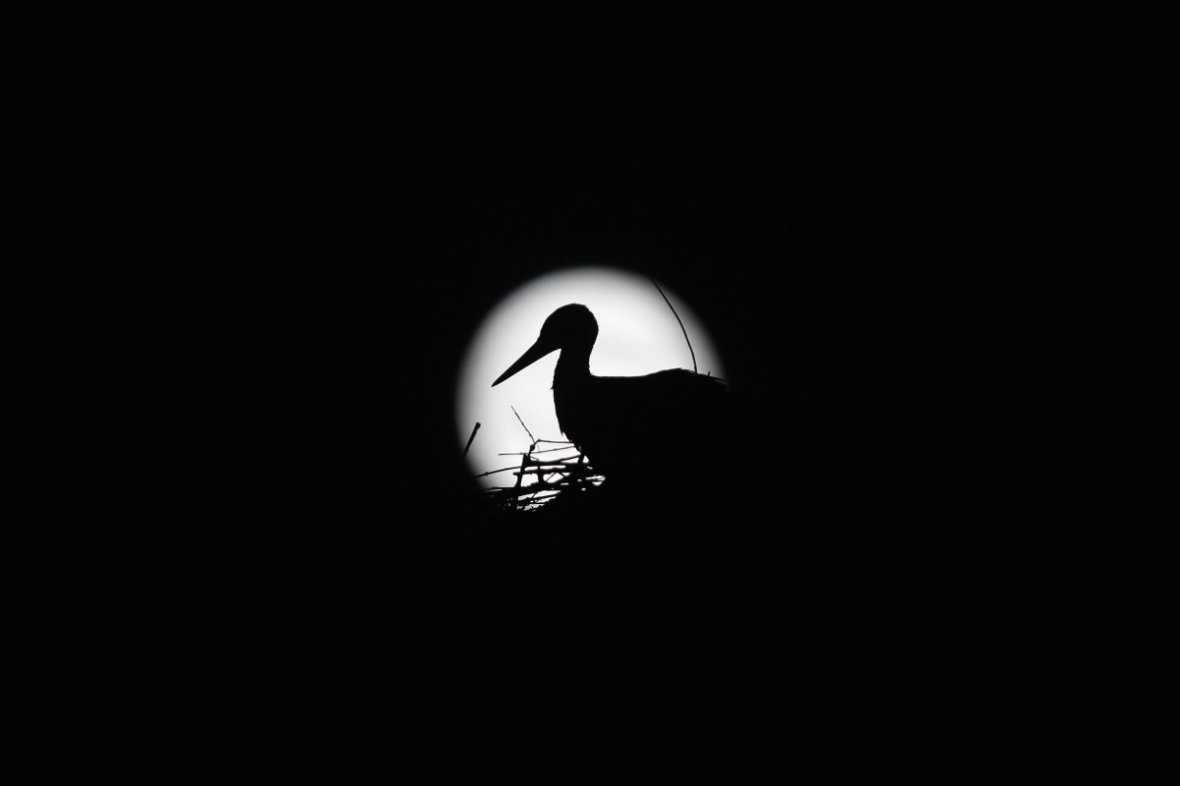 A stork is silhouetted against the Supermoon in its nest in downtown Arriate, in the southern Spanish province of Malaga