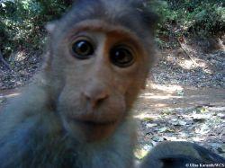 camera trap monkey