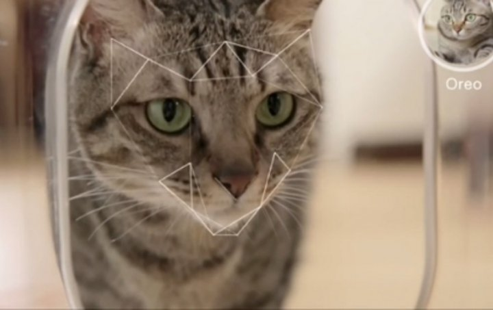Here, kitty kitty: Futuristic technology to feed pets when owner is out and also do health alerts