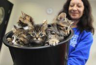 Battersea kittens