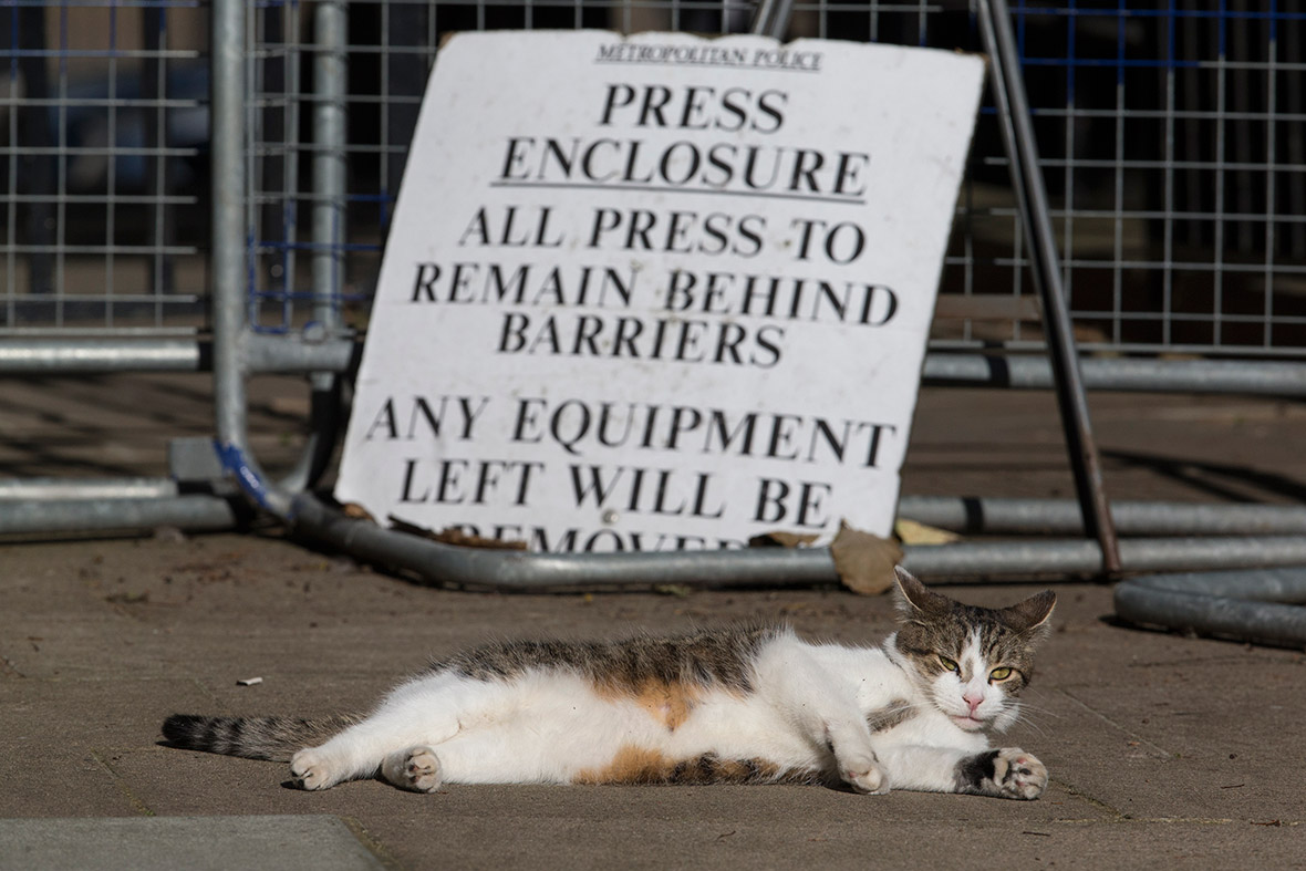 downing street cat larry