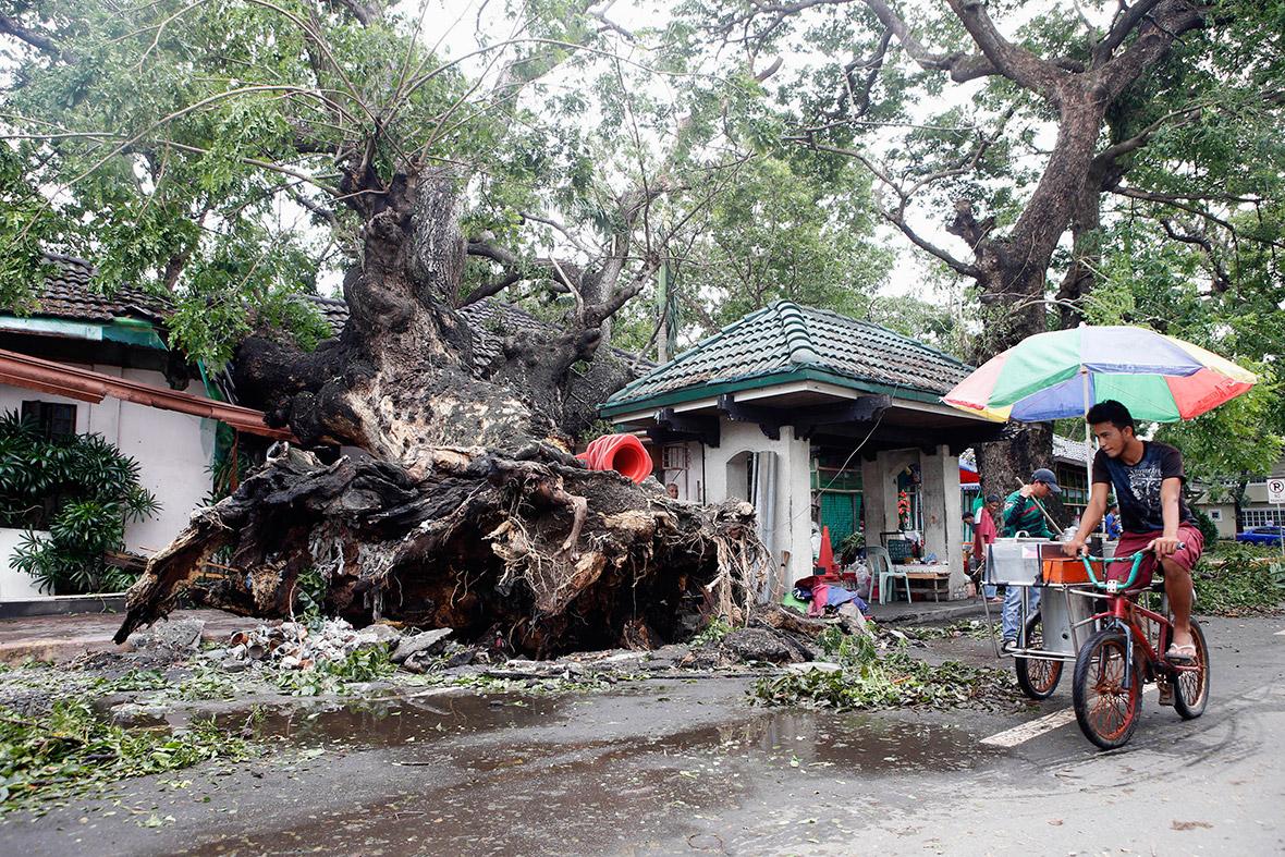 typhoon tree