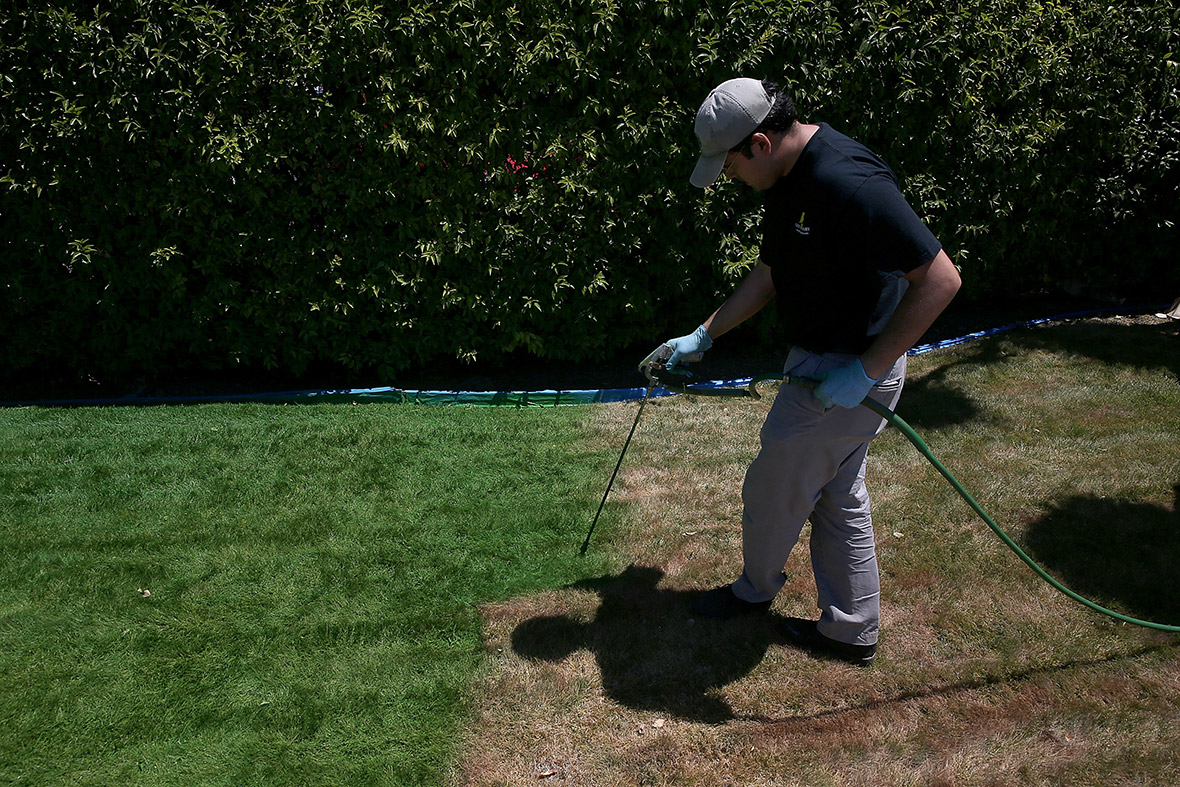 california drought residents paint their lawns green