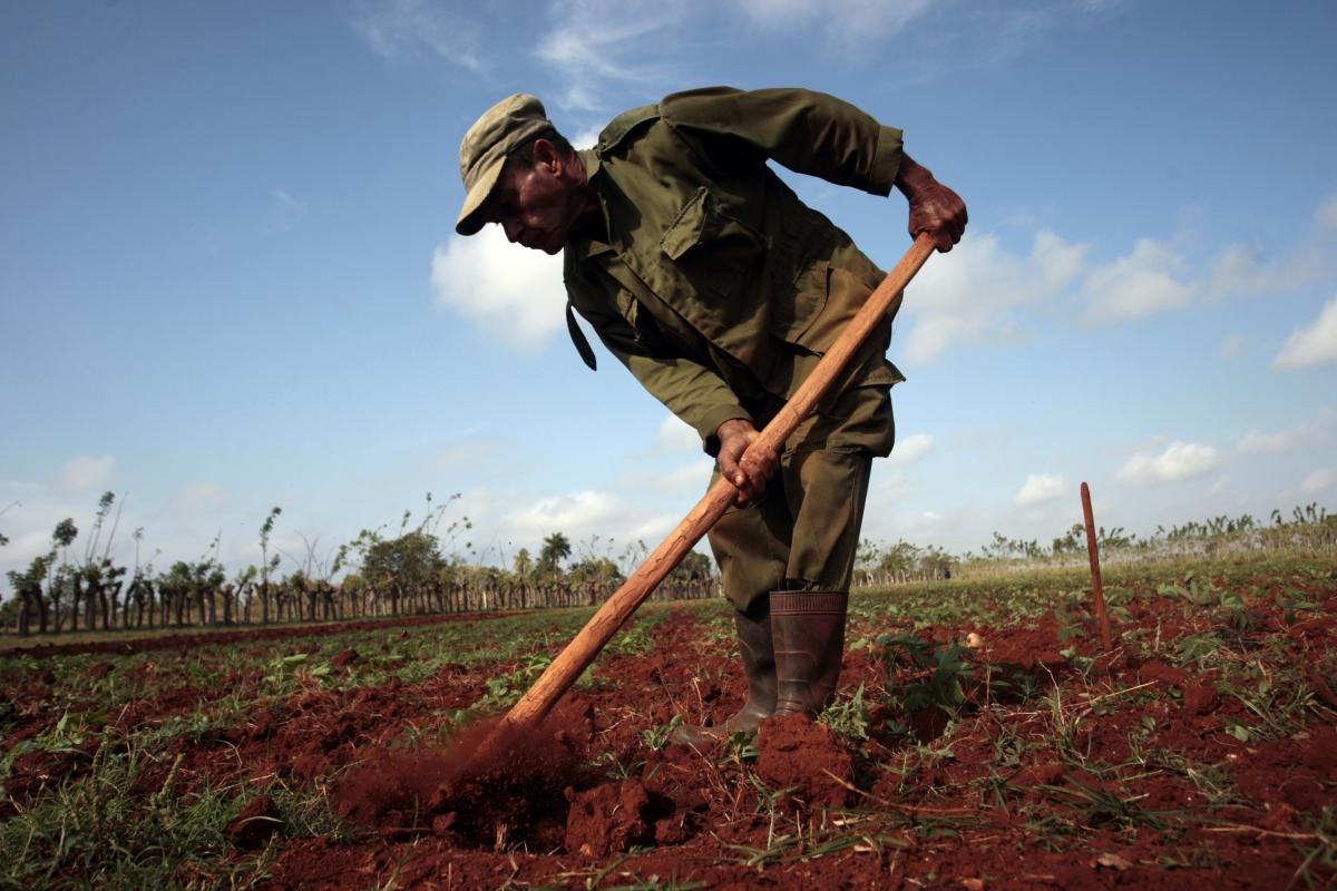 Cuba farmer