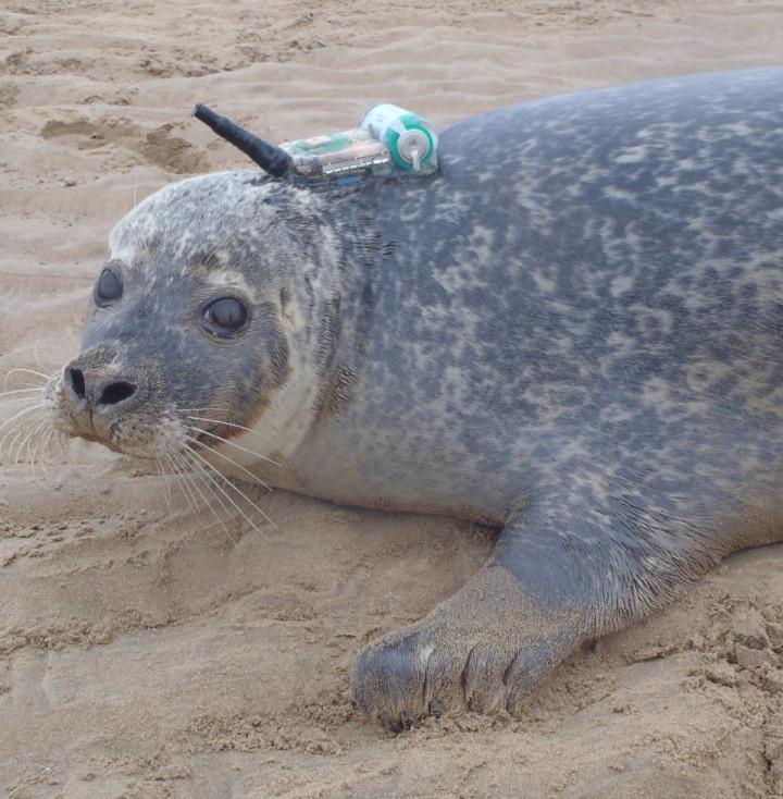 GPS seal