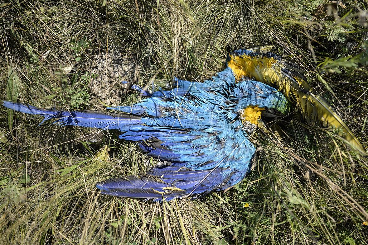 mh17 dead parrot