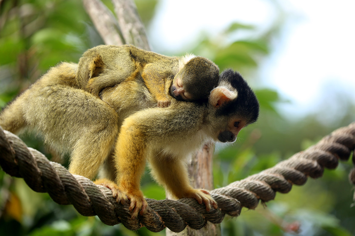 london zoo monkey