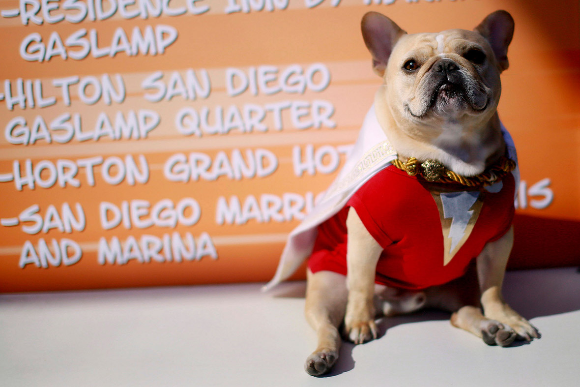 comic con dog captain marvel
