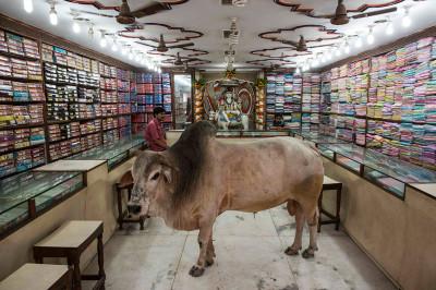 bull in shop