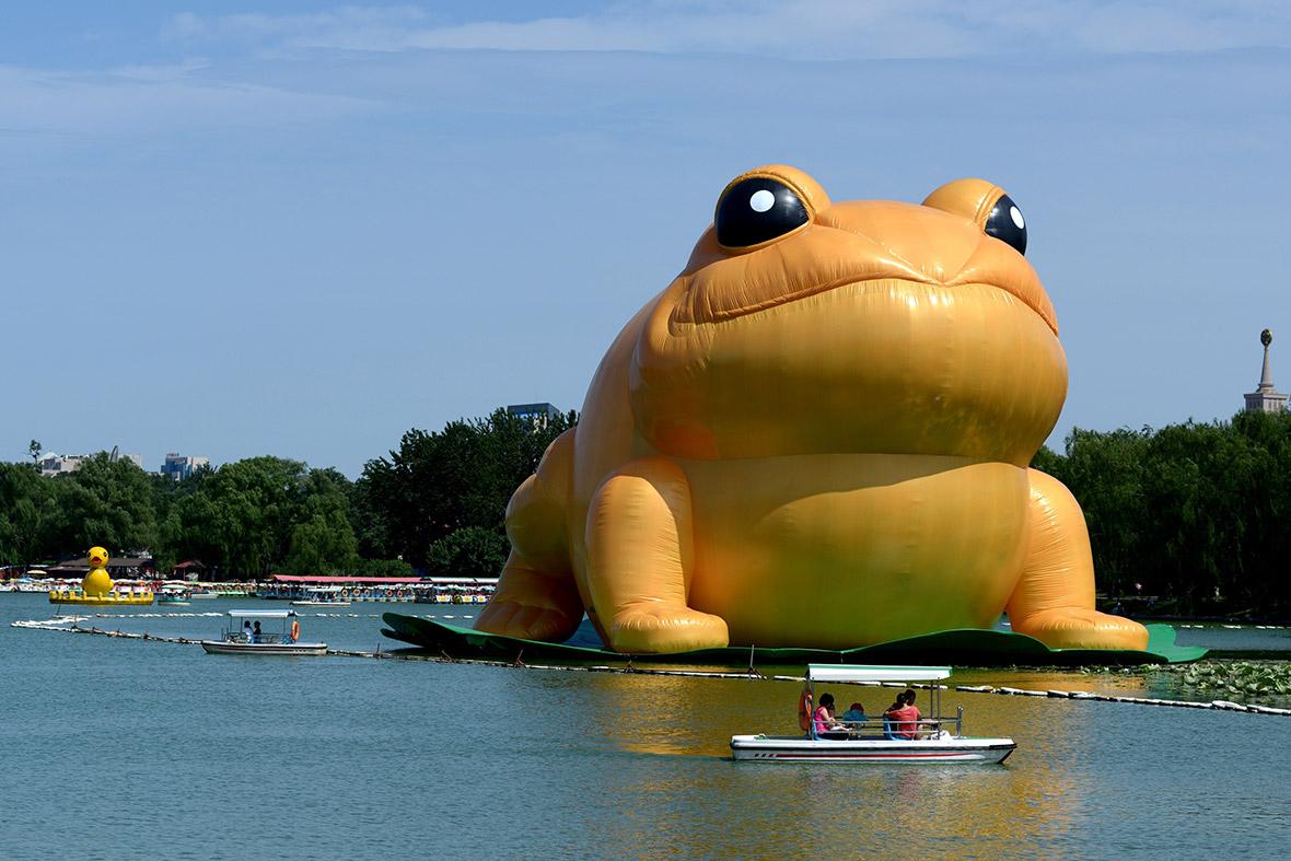 giant inflatable frog