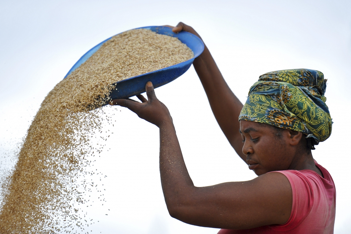 Solution to World Hunger? Scientists Sequence Genome of African Rice thumbnail