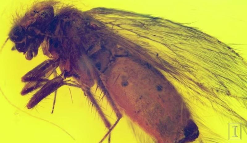 Electrotettix attenboroughi