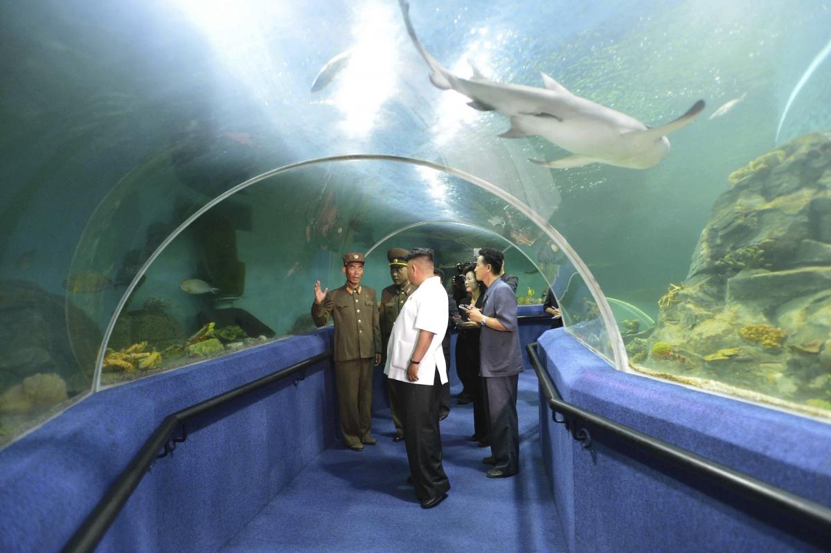 Aquarium at Songdowon International Children's Camp: Fancying sleeping with the fishes?