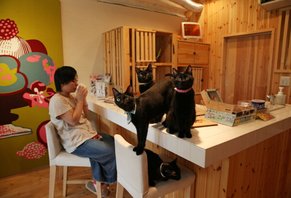 Japan's Black Cats Only Cat Cafe