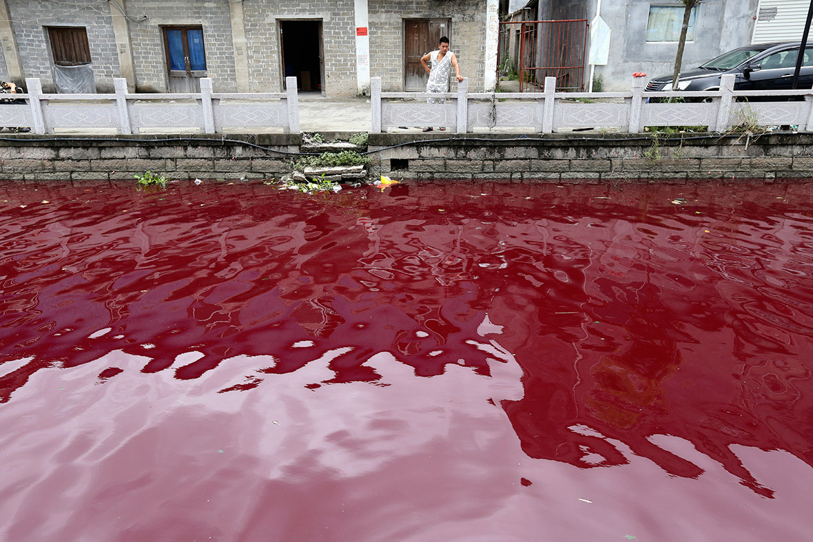 Dead Pigs and Rivers of Blood: Shocking Photos of Water Pollution in China