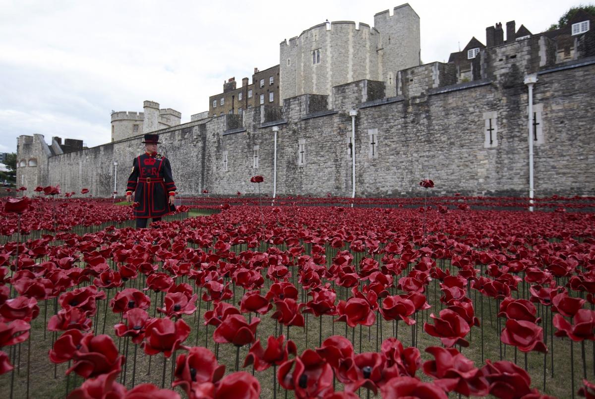 world war 1 poppy