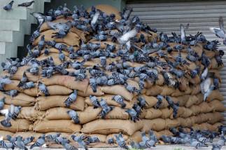 Food Storage India